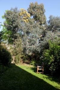 Dorothy's Garden